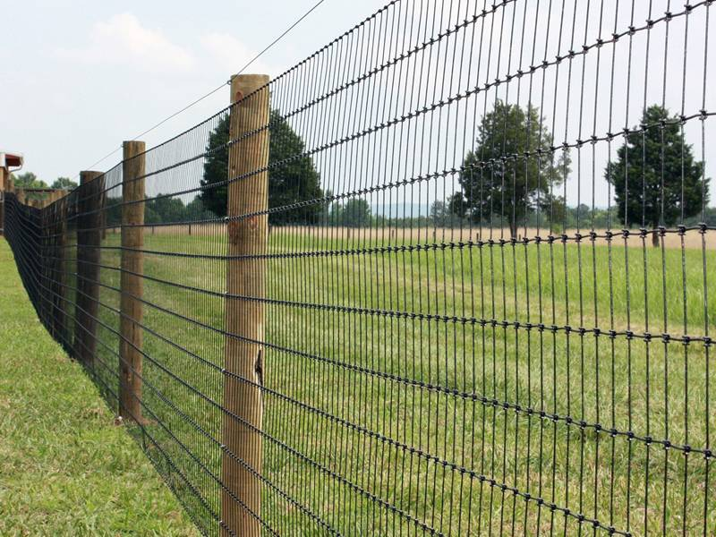 Grassland Fence With Hinge Joint Knot & Fixed Knot From 0 8