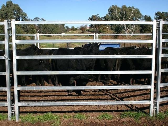 Corral Panels Temporary Livestock Fencing Of Horses
